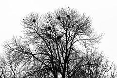 Where Birds Live