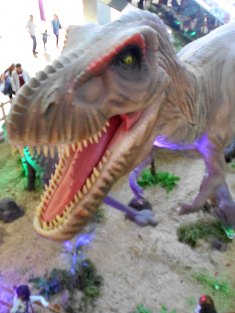 DSCN2703 - Tyrannosaurus rex, Theropoda