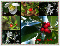 JOYEUX NOËL/MERRY CHRISTMAS