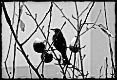 ... zwischen den Zweigen ...