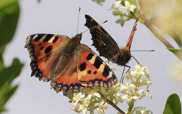 fil(et) à papillons - Page 12 44931872.4b9676db.640