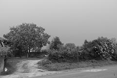 Un petit  coin de campagne en noir et blanc