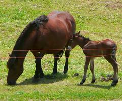 H like HORSES