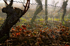 Spätherbst im Weinberg - Late autumn in the vineyard