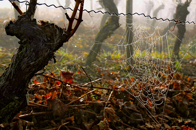 Spätherbst im Weinberg - Late autumn in the vineyard