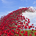 Poppies: Wave..........Fort Nelson, Portsmouth (2)