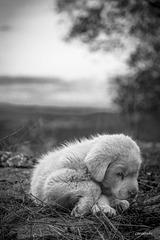 Tristeza canina.