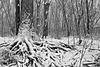 Racines sous la neige/Roots and Snow