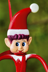 Wee Elf Closeup