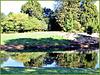 Park Reflecting.