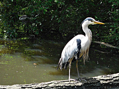 A heron there