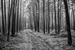 Winterwald im Flachland
