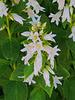 11 (10)..flower blume austria
