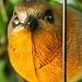 Bird in a Cage  Closeup