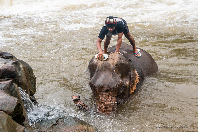 Cleaning your elephant