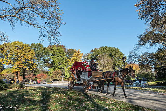 Horses & Carriages  in Central Park