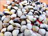 Recife : Itamaracà - Praia da Coroa do Avião - i frutti del mare