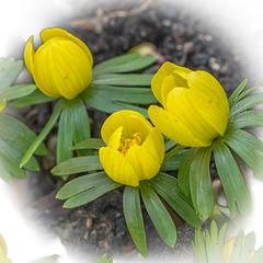 Komm Frühling, komm ...
