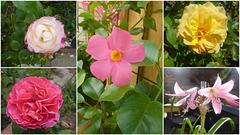 Blüten im Sommer - someraj floroj