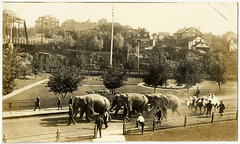 KN0375 KENORA - [CIRCUS ANIMALS - ELEPHANTS & CAMELS 2]
