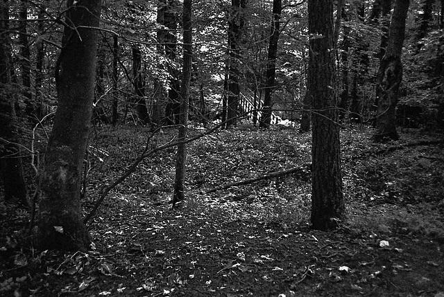 Skipton Woods.