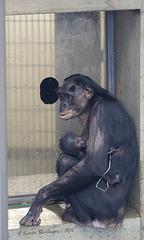 Huenda mit Baby (Wilhelma)