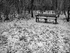 Snowy bench seat in B&W