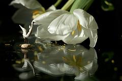 Le Lac Céleste : L'oiseau blanc