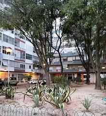 A small garden between Benfica's blocks - XI