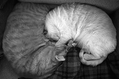 Kitty Yin and Yang