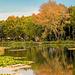 Halcion Days - Lliswerry pond