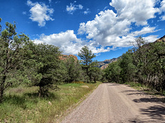 Forest Service Road - 42