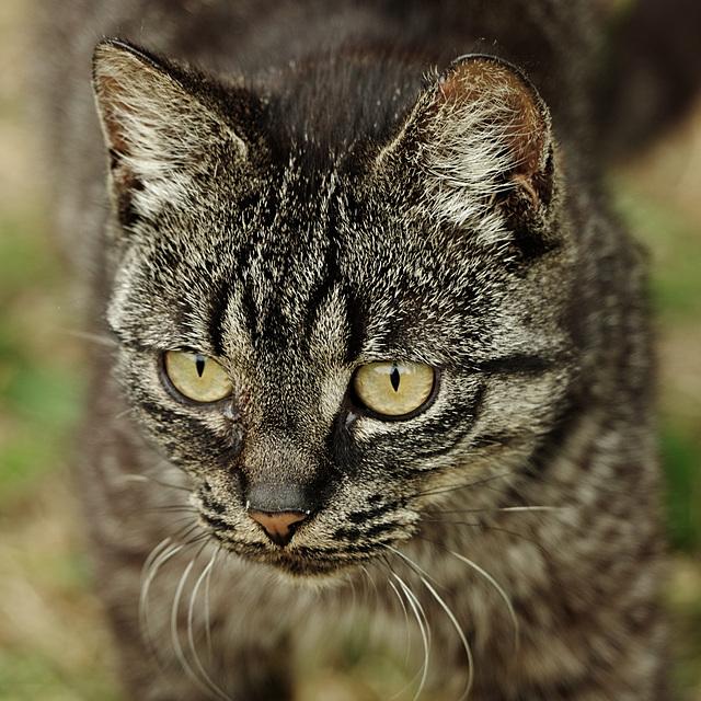 Wieder ein Katzenfoto......