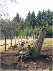 Wildgehege Pforzheim-Büchenbronn (HFF)