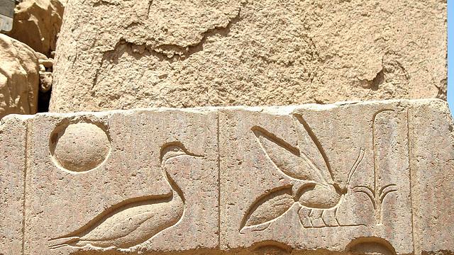 8 Chasseur d'images Egyptien