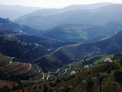 Goodby Douro - see you again in February