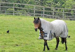 HFF horse.