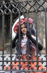 Fence n' roses