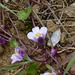 Blütengestrüpp