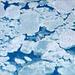 06 Newfoundland Sea Ice Flows