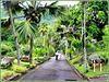 MAHE' : ingresso al 'Botanical Garden' di Victoria