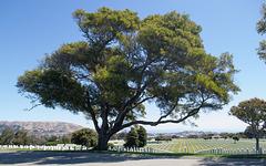 Golden Gate Natl Cemetery (#0963)