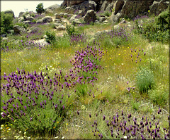H. A. N. W. E. my friends! La Cabrera wildflowers