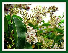 Flowering Bush.