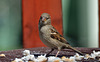 Bird Feeding at Angecroft