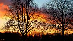 Couchant Lillois,malgré une soirée hivernale bien glacée .