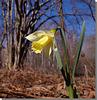 Le printemps en tourbière.