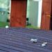 2 Birds Feeding At Angecroft