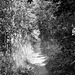 Hertfordshire footpath