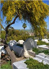 Cemetery Acacia, Fez